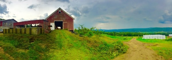 Winsome Farm Organics Panoramic View
