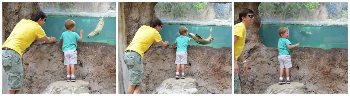 3 photo collage of father and young son looking into otter tank at zoo.