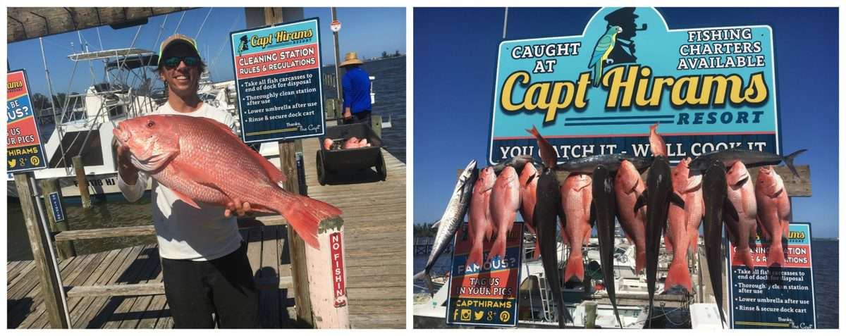 2 photo collage of man holding up a red snapper and fish strung up in front of captain hirams resort sign.